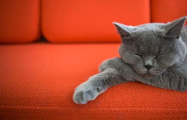 Как избавиться от запаха кошачьей мочи на диване: идеи и советы