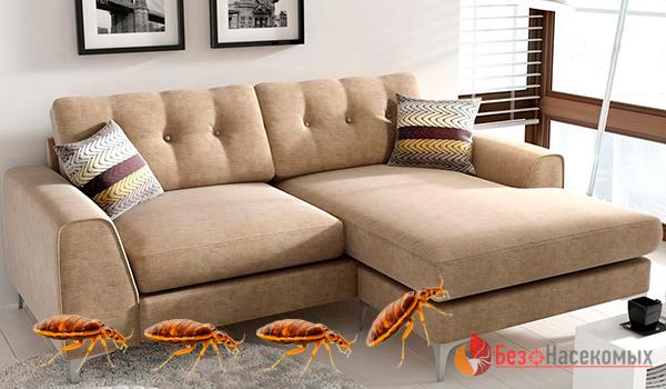 Как избавиться от клопов в диване: полезные советы