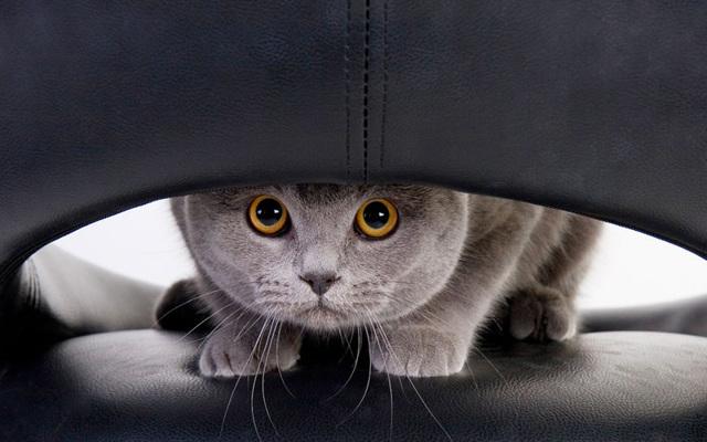 Как избавиться от запаха кошачьей мочи на ковре в домашних условиях?