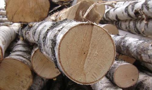 Выбираем дерево для изготовления мебели по цвету и текстуре