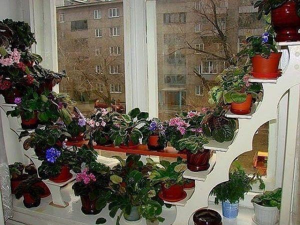 Полки для цветов на подоконнике: виды, описание, фото